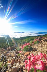 コマクサと甲斐駒ケ岳などの山並みと雲海と太陽の光芒の写真素材 [FYI01515350]