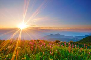 思い出の丘のヤナギランとシシウドと夕日の写真素材 [FYI01515433]