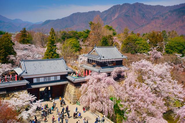 桜咲く上田城の写真素材 [FYI01515458]