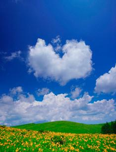 ニッコウキスゲとハート型の雲の写真素材 [FYI01515726]