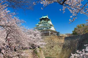 桜咲く大阪城の写真素材 [FYI01515752]