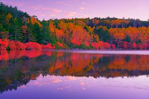 朝の紅葉の水鏡の白駒池の写真素材 [FYI01515943]