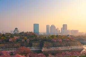 朝の桜咲く大阪城と大阪ビジネスパークのビル群の写真素材 [FYI01515954]