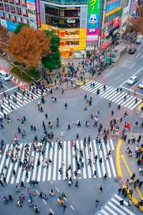 渋谷駅前スクランブル交差点を行き交う通行人の写真素材 [FYI01515959]