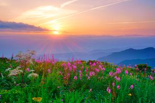 ヤナギランとシシウドと立山など北アルプスの山並みと夕日の写真素材 [FYI01515995]