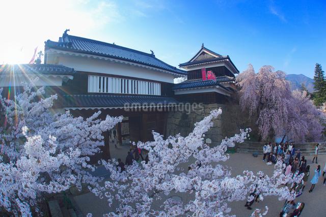 桜と上田城と夕日の木もれ日の写真素材 [FYI01516000]