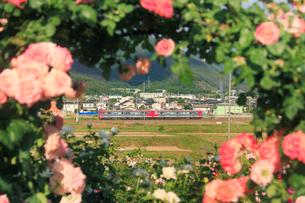 バラとしなの鉄道の電車の写真素材 [FYI01516022]