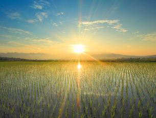 水鏡の田園と浅間山などの山並みと朝日の写真素材 [FYI01516104]