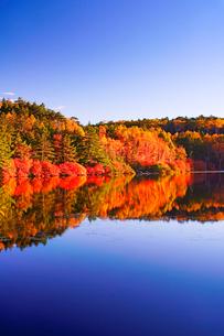 朝日に染まる紅葉の水鏡の白駒池の写真素材 [FYI01516218]
