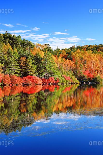 紅葉の水鏡の白駒池の写真素材 [FYI01516229]