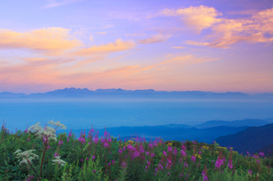 朝焼け空とヤナギランとシシウドと穂高連峰と槍ヶ岳の写真素材 [FYI01516302]