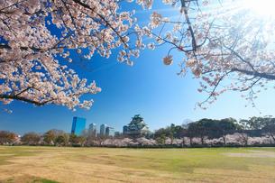 桜咲く大阪城と芝生広場と木もれ日の写真素材 [FYI01516340]