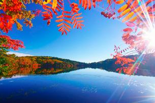 紅葉の水鏡の白駒池とナナカマドと朝の木もれ日の写真素材 [FYI01516358]