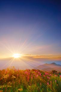 思い出の丘のヤナギランとシシウドと夕日の写真素材 [FYI01516376]