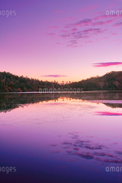 黎明の紅葉の水鏡の白駒池の写真素材 [FYI01516388]