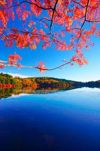 紅葉の水鏡の白駒池とナナカマドの写真素材 [FYI01516488]