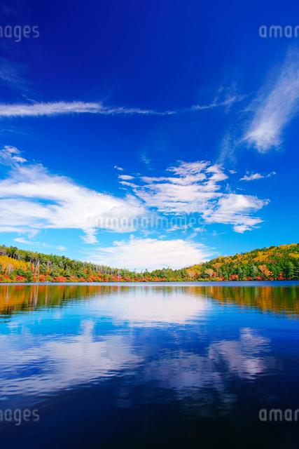 紅葉の水鏡の白駒池と秋空の写真素材 [FYI01516539]