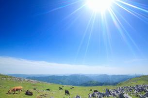 ジャージー種と黒毛和牛と五段高原の石灰岩群と南方向の山並みの写真素材 [FYI01516751]