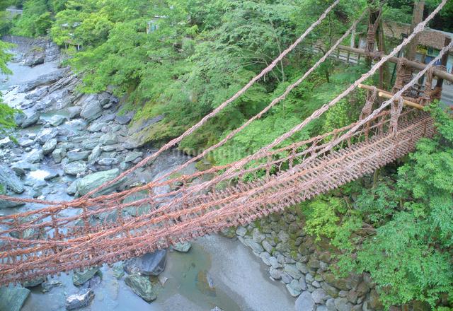 朝の祖谷のかずら橋の写真素材 [FYI01516758]