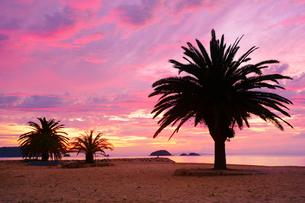 小部ビーチとナツメヤシと夕焼けと大島の写真素材 [FYI01516774]