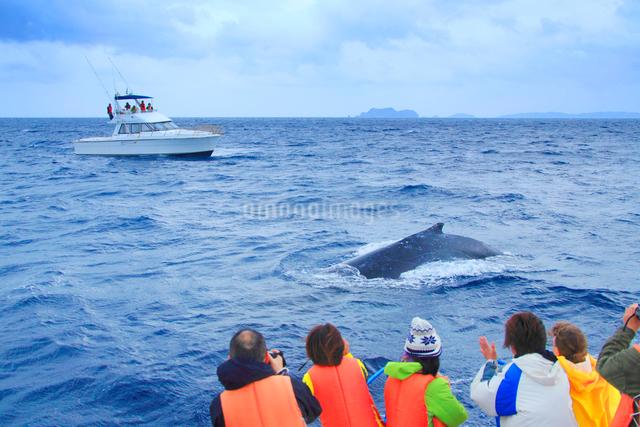 ザトウクジラとホエールウォッチング船と観光客の写真素材 [FYI01516821]
