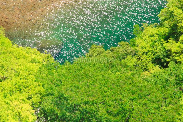 ひの字溪谷展望台から望む輝く祖谷川の水面と樹林の写真素材 [FYI01516839]