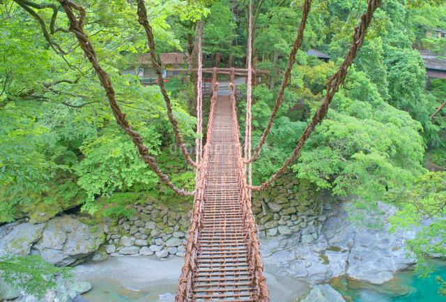 朝の祖谷のかずら橋の写真素材 [FYI01516915]