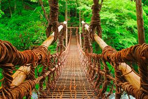 雨に濡れる祖谷のかずら橋の写真素材 [FYI01516918]