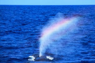 ザトウクジラのレインボーブロウの写真素材 [FYI01517001]