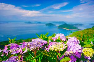 紫雲出山のアジサイのアップと粟島などの島々の写真素材 [FYI01517033]