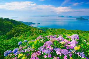 紫雲出山のアジサイと箱浦港の写真素材 [FYI01517170]