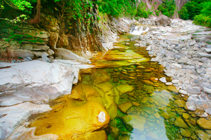 五色橋から望む面河渓上流側の清流の写真素材 [FYI01517252]