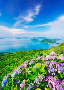 紫雲出山のアジサイのアップと粟島などの島々とすじ雲の写真素材 [FYI01517275]