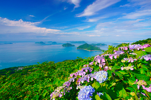 紫雲出山のアジサイと粟島などの島々とすじ雲の写真素材 [FYI01517295]