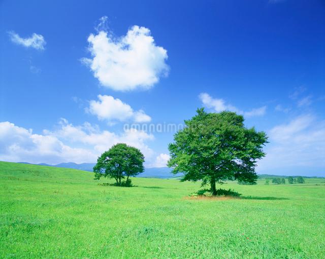 牧草地と木立の写真素材 [FYI01517366]
