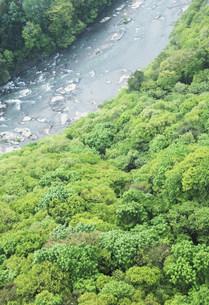 馬淵川と樹林の写真素材 [FYI01517377]