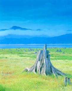 木の株郡と糠平湖の写真素材 [FYI01517378]