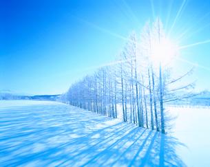 霧氷のカラマツ林と雪原の写真素材 [FYI01517462]