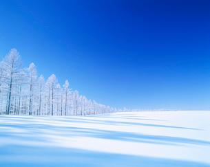 霧氷のカラマツ林と雪原の写真素材 [FYI01517500]