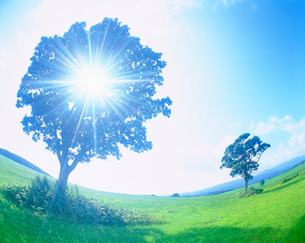 牧草地と木立の写真素材 [FYI01517502]