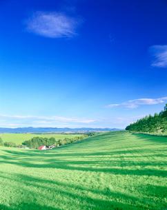 牧草地と木の影と家の写真素材 [FYI01517614]