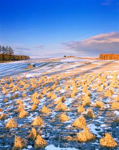 新雪とアズキ畑の朝の写真素材 [FYI01517685]