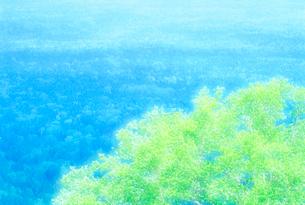 樹林帯の写真素材 [FYI01517687]