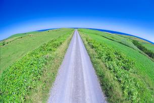 牧草地と道の写真素材 [FYI01517757]
