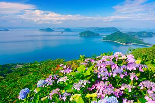 紫雲出山のアジサイと粟島などの島々の写真素材 [FYI01517915]