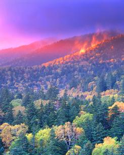 秋の樹林の写真素材 [FYI01517929]