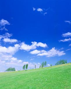 草原とポプラの写真素材 [FYI01518011]