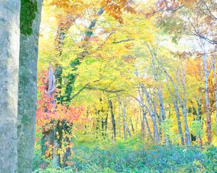 秋のブナ林の写真素材 [FYI01518074]