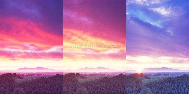 朝のカラマツ林と大雪山の写真素材 [FYI01518075]