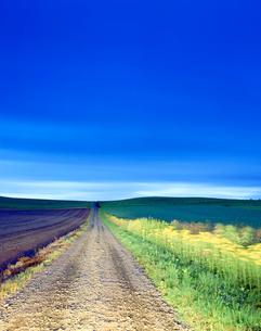 オオアキノキリンソウと道と丘陵地朝景の写真素材 [FYI01518193]